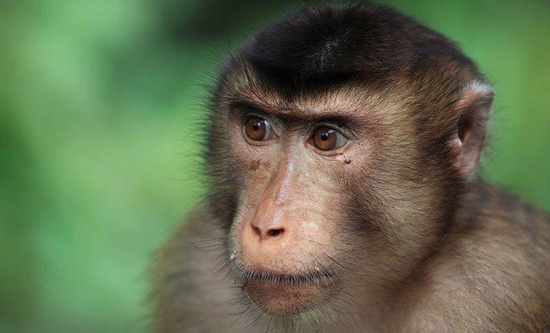 центр защиты обезьян в паттайе