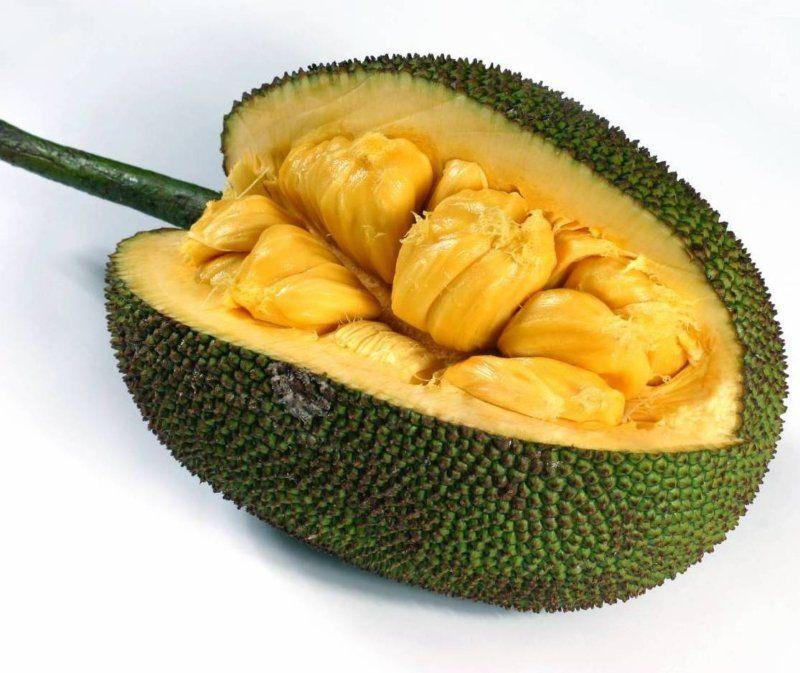 Как выглядит джекфрут